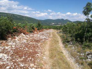 Šumski putevi