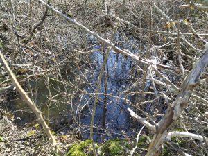 Ančića bunar (Donji Gaj)